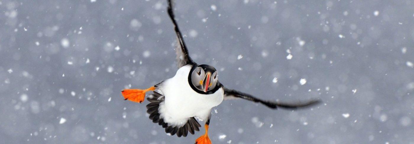 Cid3394 sider spitsbergen papegaai 1920x670 757b5576 1432x500